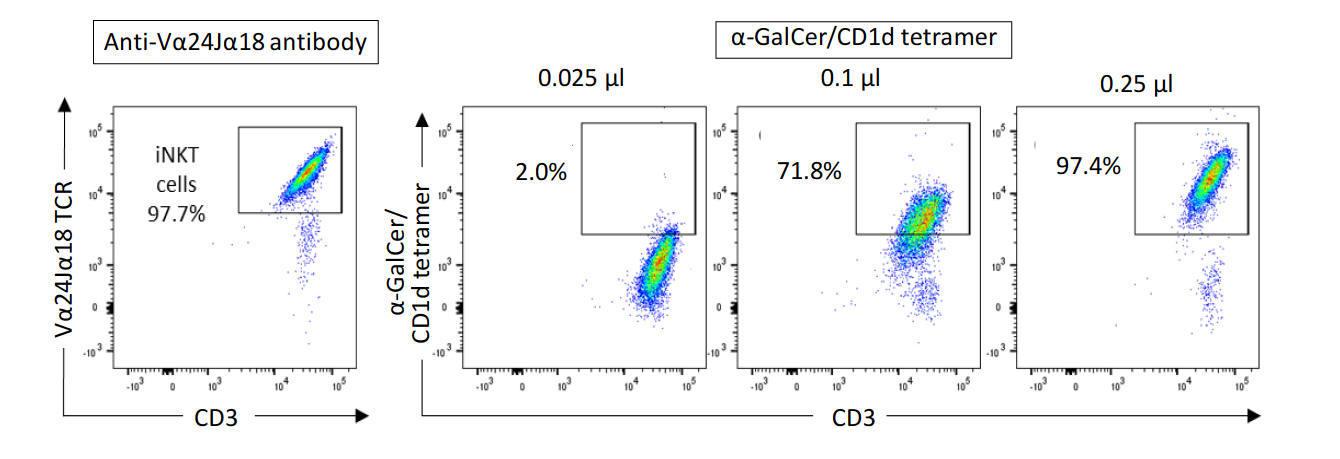 CD1d tetramer staining