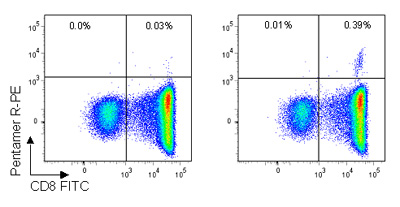 Pro5® Pentamer staining of live lymphocytes