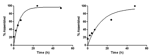 Comparison of on-rates of test and intermediate control peptides