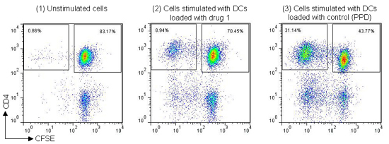 Example staining data from DC-T cell proliferation assay