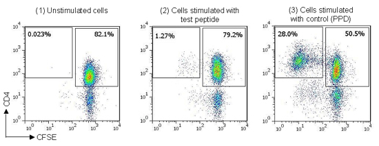 Example staining data from naïve T cell proliferation assay