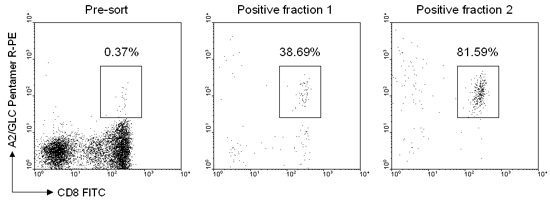 Example data from experiment using column-based method of magnetic separation